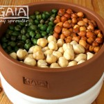 chickpeas in GAIA sprouter