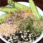 GAIA sprouter Salad ideas 2
