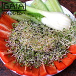 GAIA sprouter Salad ideas 3