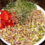 GAIA sprouter Salad ideas 5