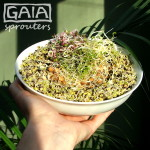 GAIA sprouter Salad ideas 7