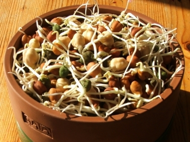 WHAT ARE THE BENEFITS OF SPROUTING IN FIRED CLAY POTS