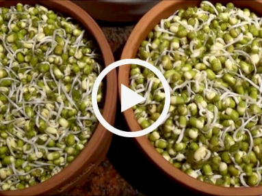 VIDEO GUIDE ON HOW TO SPROUT